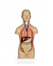 VAT106 Sexless Human Torso - 12 Parts