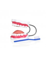 VAE460 Teeth Model with Tongue And Toothbrush