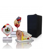 VBM-B3 Elementary and High School Learning Package. Set of Three Human Anatomy Models, Ears, Eye, and Heart with Carrying Case